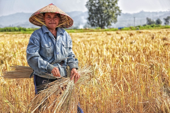 The Parable Of A Thai Farmer You Must Read